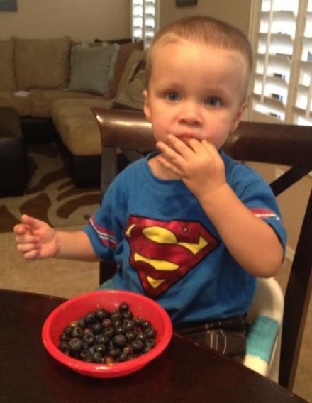 Let's Celebrate Blueberries!