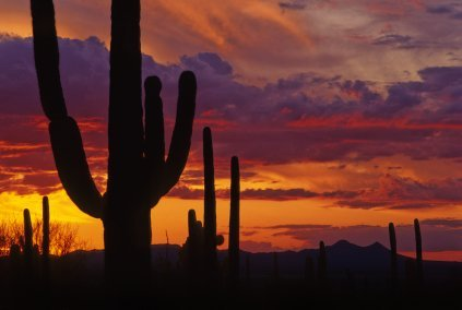 Sunsets and Cacti of Arizona - Learn why I love AZ at https://heidipowell.net/5189